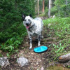 Spend The Dog Days Of Summer At Keystone With Your Furry Friends