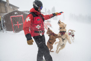 Ski Patrol Avi Dogs